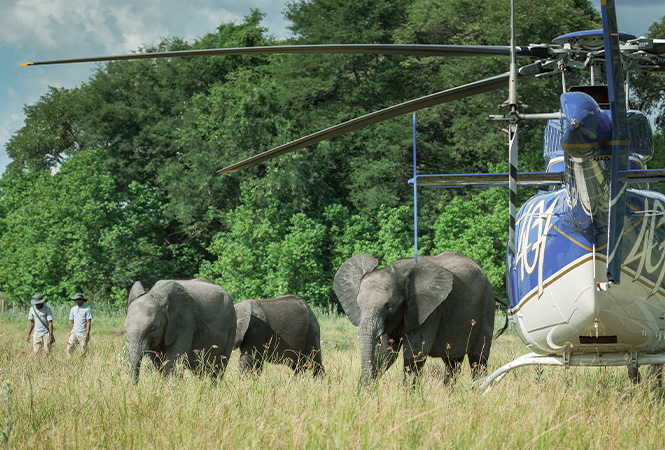 Tour to elephant haven with Helicopter Horizons
