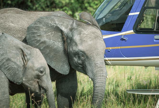 Elephant haven experience