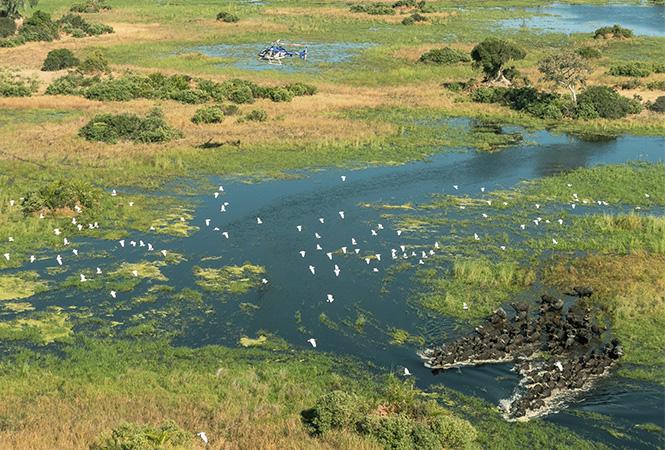 Safari across the wondrous Okavango delta by air