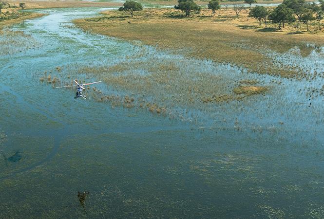 Chartered flights through the Okavango Delta