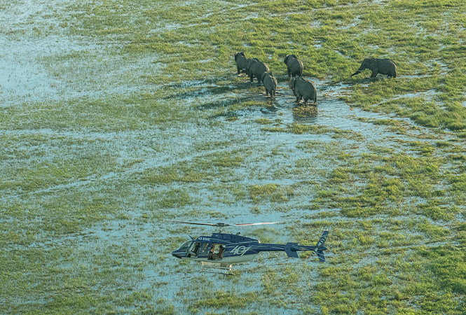 Explore incredible wildlife on safari with Helicopter Horizons