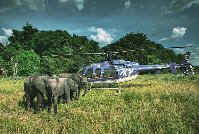 Elephant haven Botswana