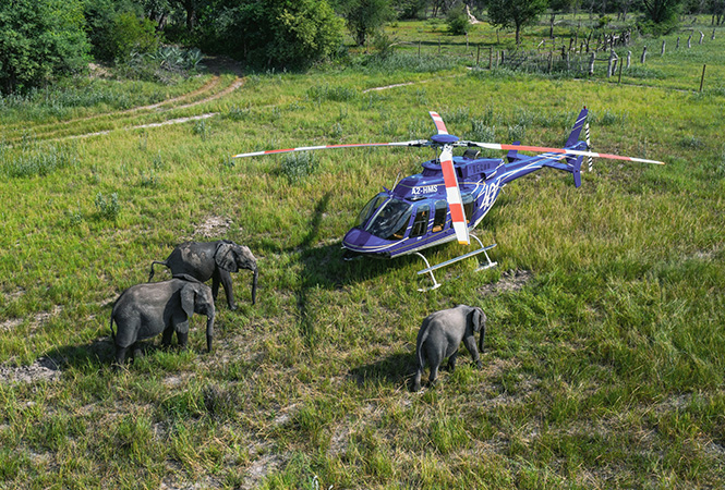 Helicopter safari to elephant haven