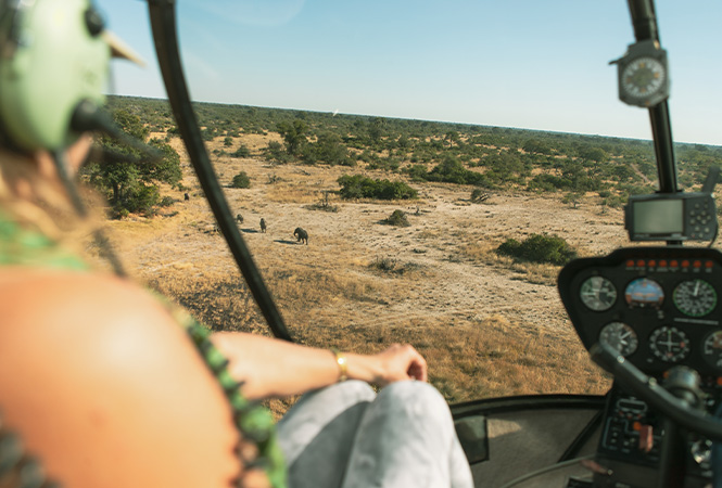 View of elephants from a helicopter