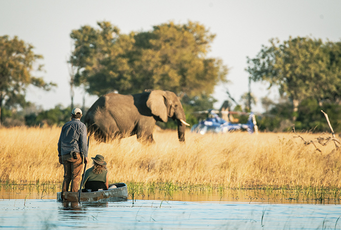 On safari with Helicopter Horizons and traditional Mokoro