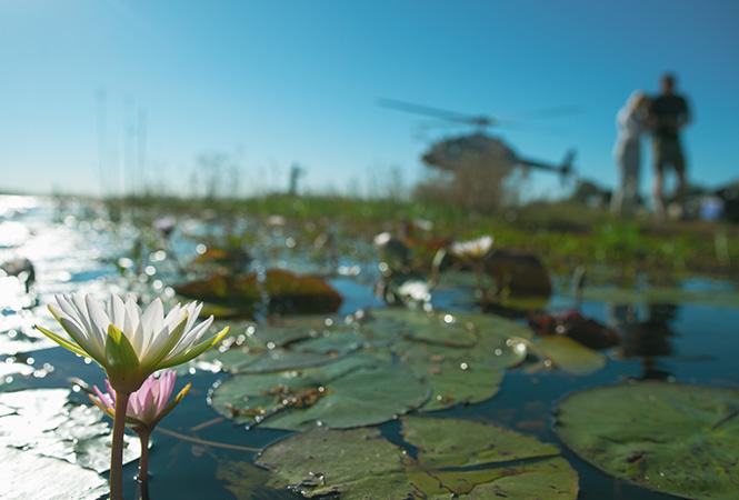 Helicopter Horizons wildlife experiences