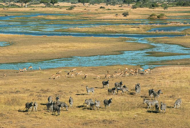 Wildlife on the Delta