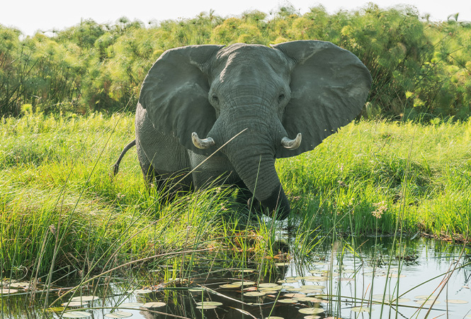Elephant sighting whilst on safari with Helicopter Horizons