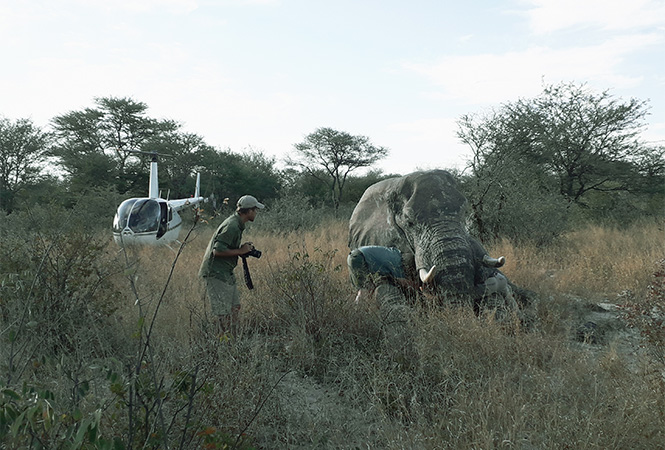 Elephants Without Borders is crucial for preserving biodiversity and a healthy landscape management