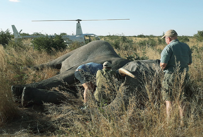 Giving back with Elephants Without Borders