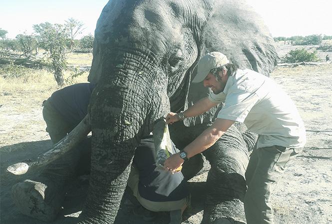 Elephants Without Borders (EWB) Kazungula, Botswana's border town