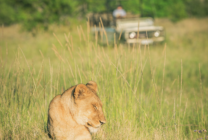 Game watching on safari with Helicopter Horizons