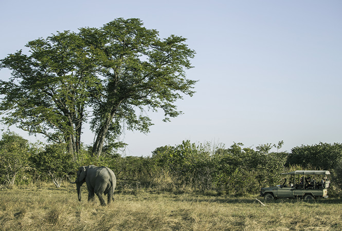 Witness the wilderness on safari with Helicopter Horizons