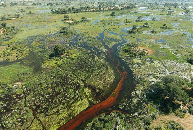 Waterways of the Okavango
