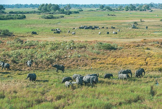 Heliflips and elephants on the Okavango delta
