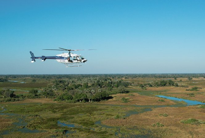 On a full-day safari adventure with Helicopter Horizons