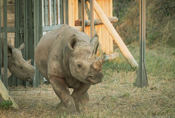 Rhino conservation Botswana