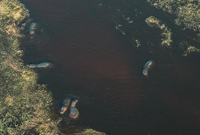 Hippo aerial photograph