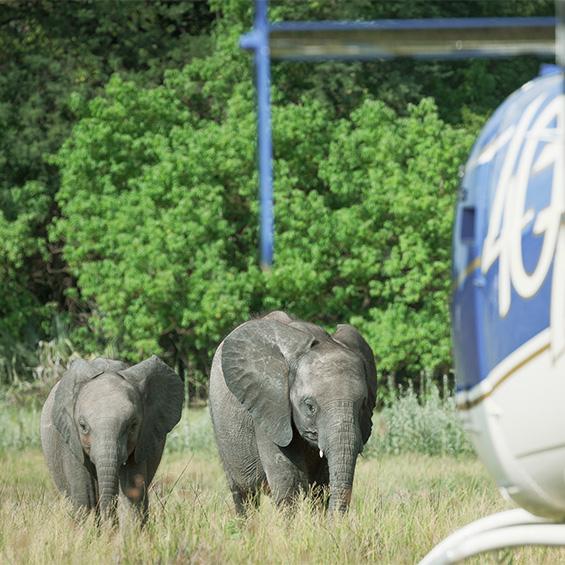 Elephant Havens Experience