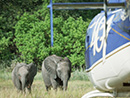 Helicopter safaris to elephant haven in Botswana
